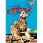 Meet a Baby Ostrich
